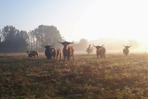 Our Livestock